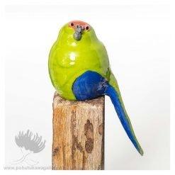 Julie Lee Birds NZ Parrot