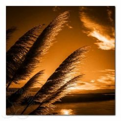 Kirk O'Donoghue Canvas Print - Orange Toitoi, Mt Maunganui, Mount, NZ, New Zealand