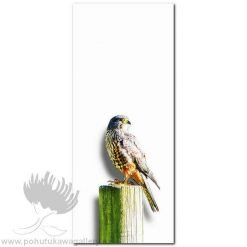 Kirk O'Donoghue canvas print Falcon