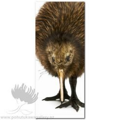 Kirk O'Donoghue canvas print Kiwi NZ Birds New Zealand