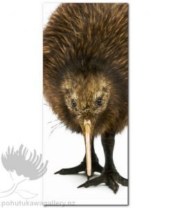 close kiwi