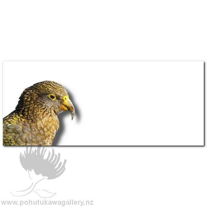 Kirk O'Donoghue canvas print Kea NZ Birds New Zealand
