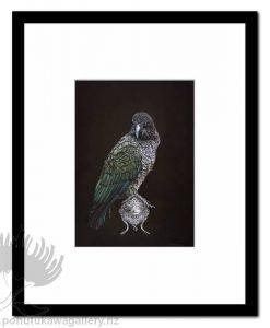 Kea On Vessel by Jane Crisp - Art Prints New Zealand