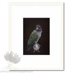Kea On Vessel by Jane Crisp - Art Prints New Zealand