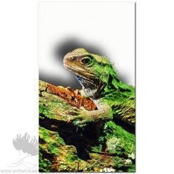 new zealand tuatara art print