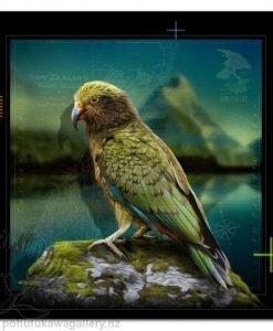 Kea by Julian Hindson - Art Prints New Zealand NZ