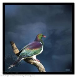 King Kereru by Julian Hindson - Art Prints New Zealand Wood Pigeon NZ