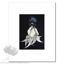 Tui And White Kakabeak by Jane Crisp - Art Prints New Zealand