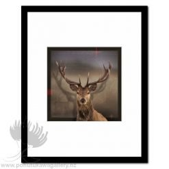 Deer by Julian Hindson - Art Prints New Zealand NZ