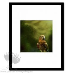 Kea Kaha by Julian Hindson - Art Prints New Zealand NZ