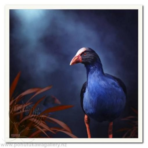 Pukeko On The Prowl by Julian Hindson - Art Prints New Zealand NZ