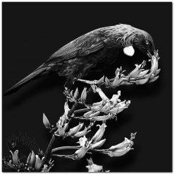 Tui Black and White New Zealand Kowhai NZ
