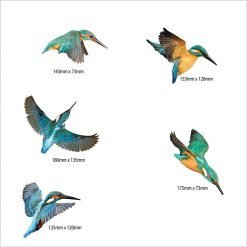 Printed ACM Birds Set: Kingfisher