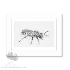 Leioproctus Angie Dennis - Contemporary New Zealand art for your home and business