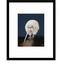 NZ Kiwi Pensioner by Bonnie Fraser - Art Prints New Zealand