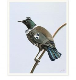 NZ Tui Officer by Bonnie Fraser - Art Prints New Zealand